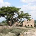 Magnificent Ex-Hacienda Del Carmen on Approx. 44.5 Acres/18 Hectareas - Historic Adobe and Stone Structures Shaded by Mesquite Tree