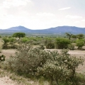 Magnificent Ex-Hacienda Del Carmen on Approx. 44.5 Acres/18 Hectareas - View of the Land and Frontage Road