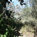 Land: Great Location in Town - Landscaped vegetation can provide privacy