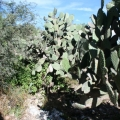 Land: Great Location in Town - Cactus on the property