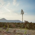 Ready-To-Build Lot at Las Barrancas Lavender Farms - View of Eagle Mountain from property
