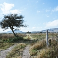 Idyllic Country Setting With Loads of Potential! - Private road to the property.