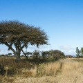 Idyllic Country Setting With Loads of Potential! - View from edge of the property to small casita.