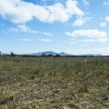 Idyllic Country Setting With Loads of Potential! - Flat land cleared for cultivation.