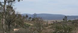 3.1 Acres of Mountain Desert Land