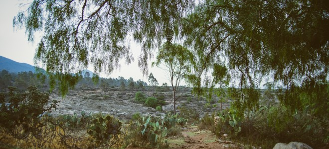 Amazing Natural Amenities: Clear Sky, Indigenous Plants, View of the Arroyo and Delicious Sunsets – EXCLUSIVE